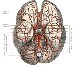 Illustration of the human brain. Image provided by Classroom Clip Art (http://classroomclipart.com)