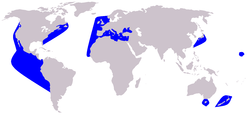 Short-beaked Common Dolphin range