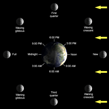 The lunar phase depends on the Moon's position in orbit around the Earth. This diagram looks down on Earth from the north.  Earth's rotation and the Moon's orbit are both counter-clockwise here.  From this diagram, we can see, for example, that the full moon will always rise at sunset, and that the waning crescent moon is high overhead around 9:00 AM local time.