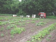 Placing honeybees for pumpkin pollination Mohawk Valley, NY