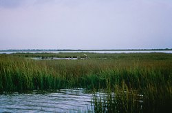 An Estuary in Texas.Estuaries and coastal waters are among the most productive ecosystems on Earth, providing numerous ecological, economic, cultural, and aesthetic benefits and services.