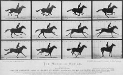 Horse Running - Edward Muybridge