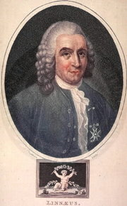 A painting of Carolus Linnaeus