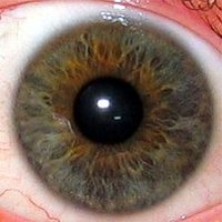 The human irisThe iris is the grey-brown area. The other structures visible are the transparent  (showing as black), the white outer , of which the central part, the , is transparent.</center>