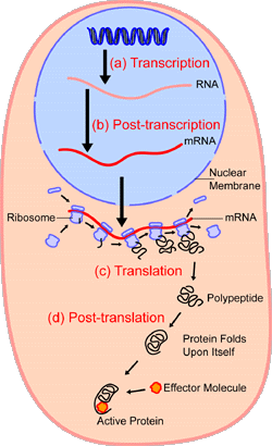 A Protein On The Other Hand Would Look Like This Diffe Reations Shown Below
