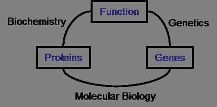 Molecular biology - Academic Kids on